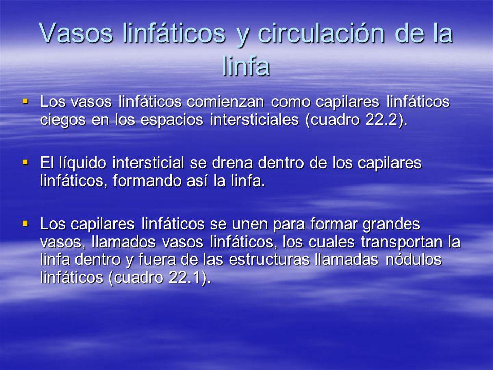 Vasos linfáticos y circulación de la linfa Los vasos linfáticos comienzan como capilares linfáticos ciegos en los espacios intersticiales (cuadro 22.2