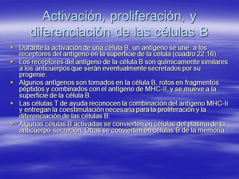 Activación, proliferación, y diferenciación de las células B Durante la activación de una célula B, un antígeno se une a los receptores del antígeno e