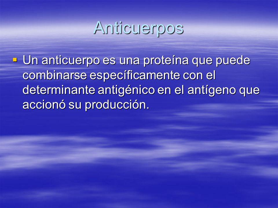 Anticuerpos Un anticuerpo es una proteína que puede combinarse específicamente con el determinante antigénico en el antígeno que accionó su producción