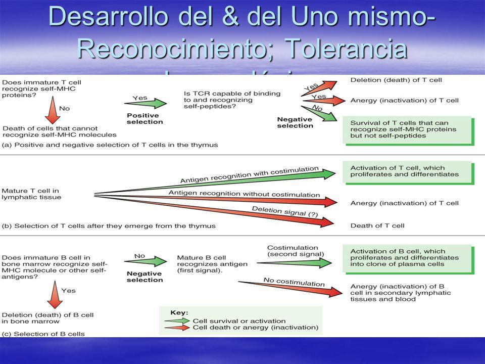 Desarrollo del & del Uno mismo- Reconocimiento; Tolerancia Inmunológica