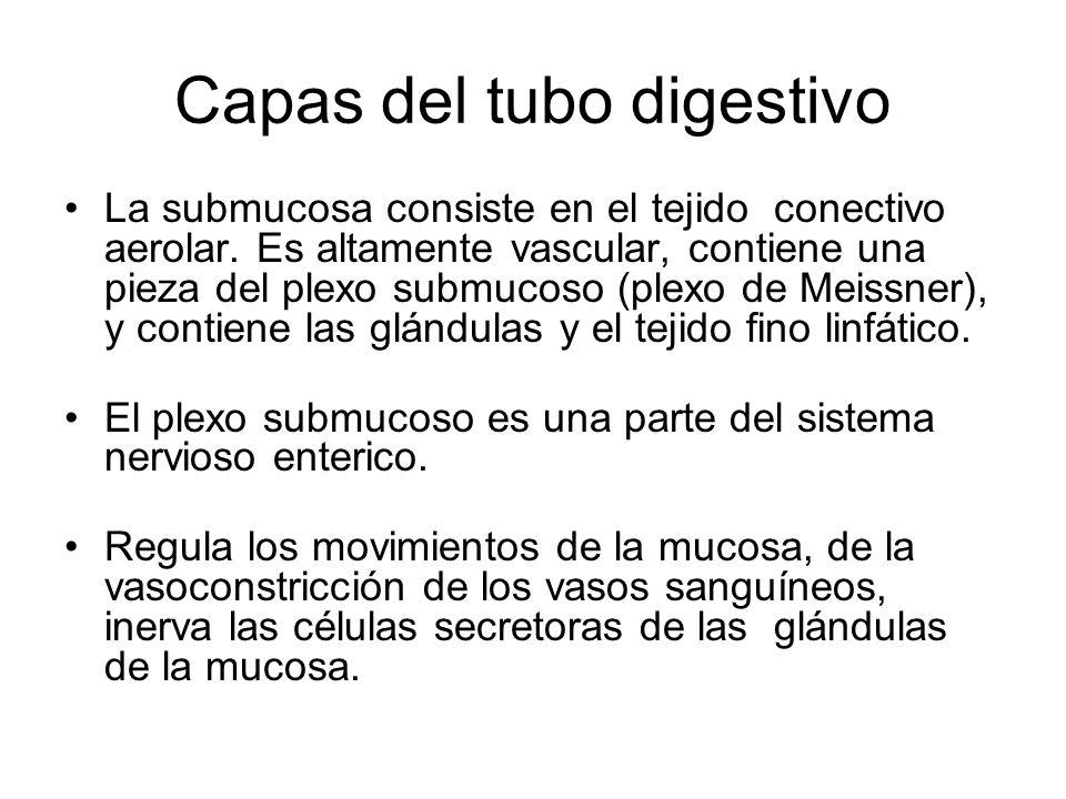 Capas del tubo digestivo La submucosa consiste en el tejido conectivo aerolar. Es altamente vascular, contiene una pieza del plexo submucoso (plexo de