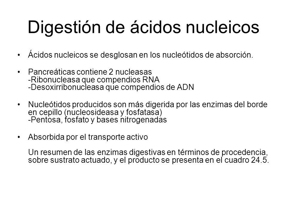 Digestión de ácidos nucleicos Ácidos nucleicos se desglosan en los nucleótidos de absorción. Pancreáticas contiene 2 nucleasas -Ribonucleasa que compe