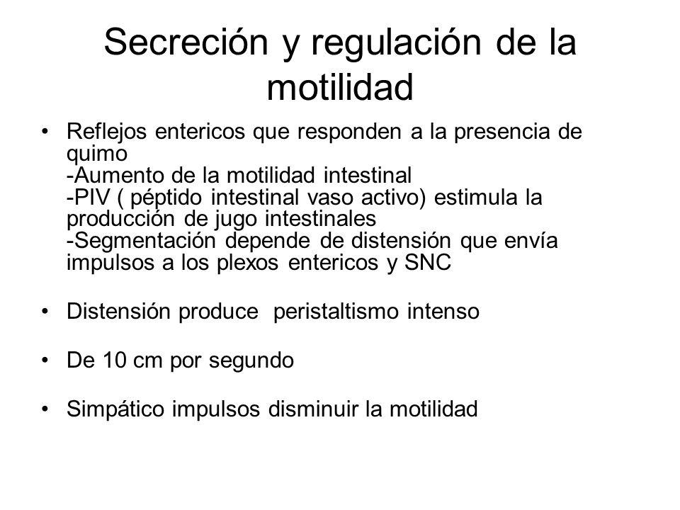 Secreción y regulación de la motilidad Reflejos entericos que responden a la presencia de quimo -Aumento de la motilidad intestinal -PIV ( péptido int
