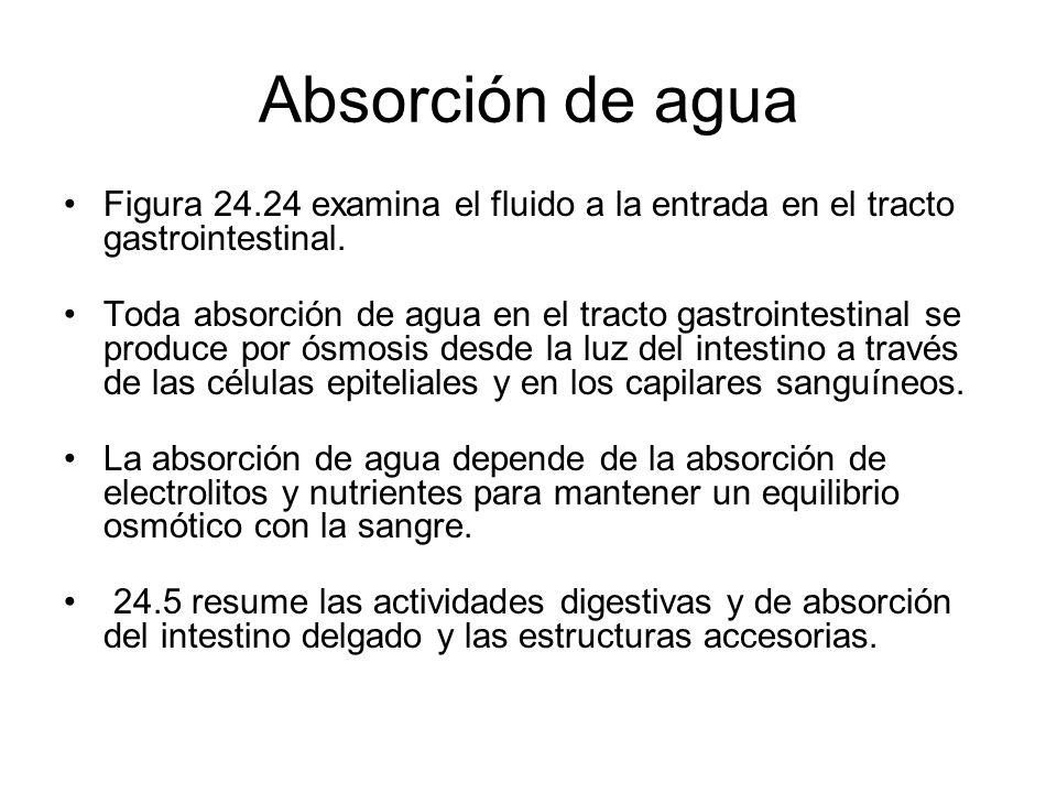 Absorción de agua Figura 24.24 examina el fluido a la entrada en el tracto gastrointestinal. Toda absorción de agua en el tracto gastrointestinal se p