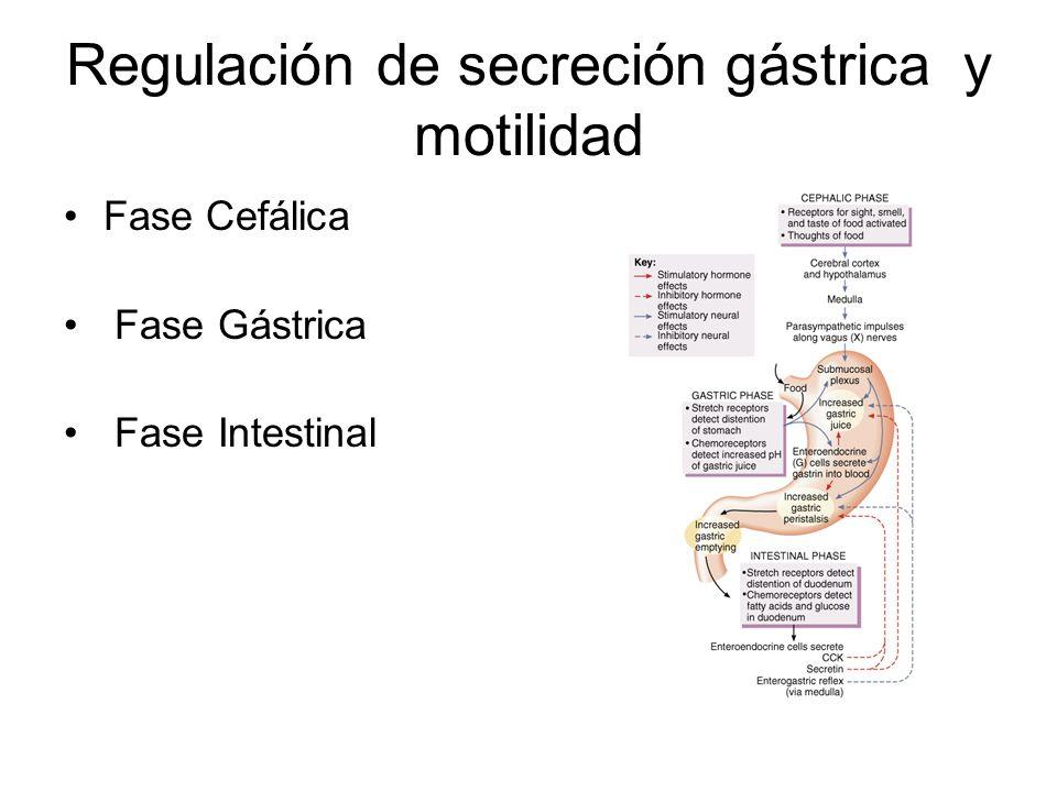 Regulación de secreción gástrica y motilidad Fase Cefálica Fase Gástrica Fase Intestinal