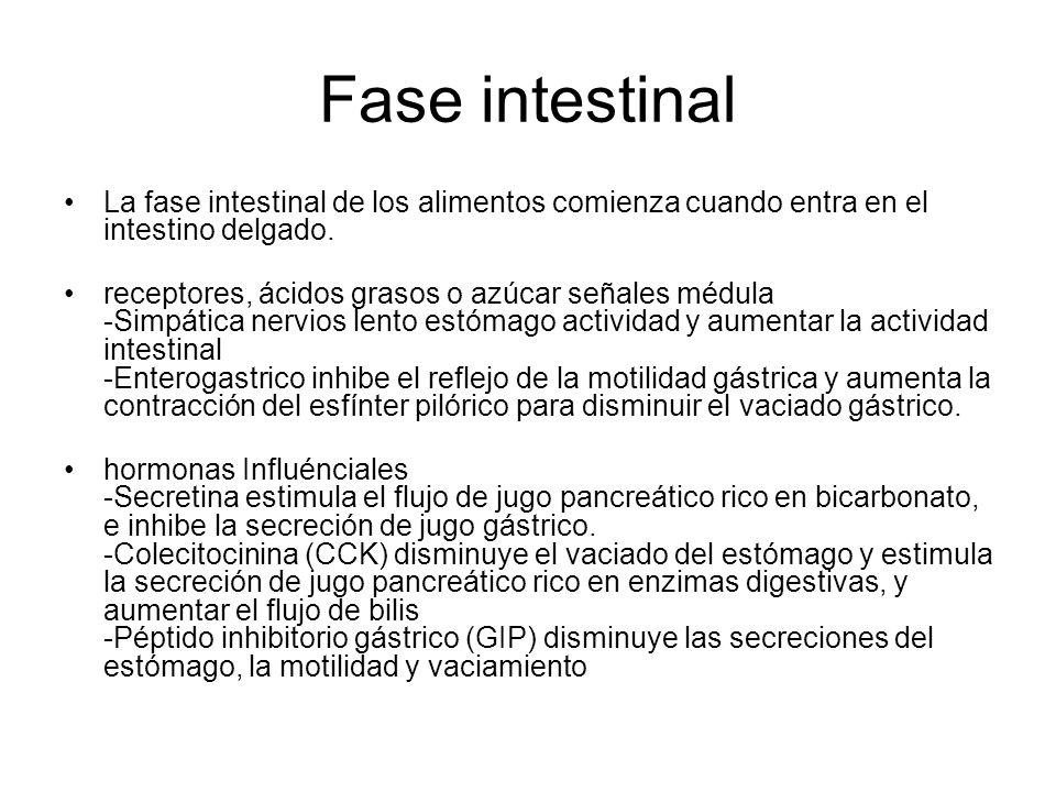 Fase intestinal La fase intestinal de los alimentos comienza cuando entra en el intestino delgado. receptores, ácidos grasos o azúcar señales médula -