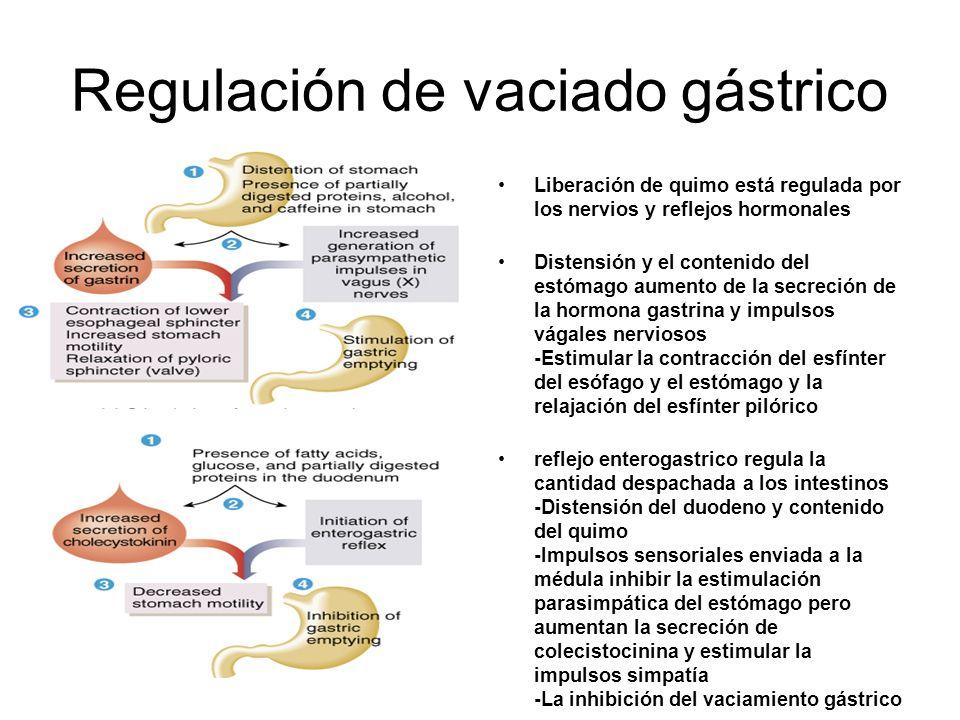 Regulación de vaciado gástrico Liberación de quimo está regulada por los nervios y reflejos hormonales Distensión y el contenido del estómago aumento de la secreción de la hormona gastrina y impulsos vágales nerviosos -Estimular la contracción del esfínter del esófago y el estómago y la relajación del esfínter pilórico reflejo enterogastrico regula la cantidad despachada a los intestinos -Distensión del duodeno y contenido del quimo -Impulsos sensoriales enviada a la médula inhibir la estimulación parasimpática del estómago pero aumentan la secreción de colecistocinina y estimular la impulsos simpatía -La inhibición del vaciamiento gástrico