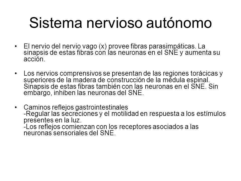 Sistema nervioso autónomo El nervio del nervio vago (x) provee fibras parasimpáticas. La sinapsis de estas fibras con las neuronas en el SNE y aumenta