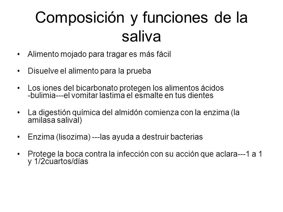 Composición y funciones de la saliva Alimento mojado para tragar es más fácil Disuelve el alimento para la prueba Los iones del bicarbonato protegen los alimentos ácidos -bulimia---el vomitar lastima el esmalte en tus dientes La digestión química del almidón comienza con la enzima (la amilasa salival) Enzima (lisozima) ---las ayuda a destruir bacterias Protege la boca contra la infección con su acción que aclara---1 a 1 y 1/2cuartos/días