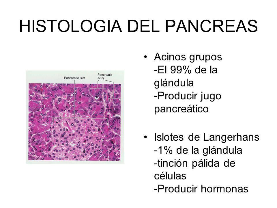 HISTOLOGIA DEL PANCREAS Acinos grupos -El 99% de la glándula -Producir jugo pancreático Islotes de Langerhans -1% de la glándula -tinción pálida de cé