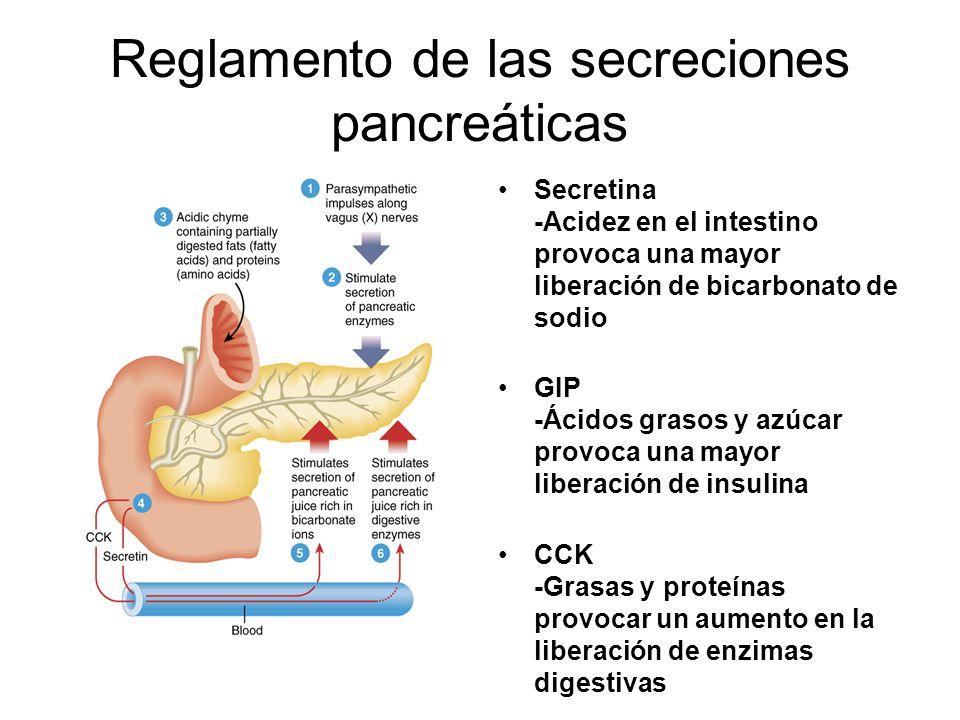 Reglamento de las secreciones pancreáticas Secretina -Acidez en el intestino provoca una mayor liberación de bicarbonato de sodio GIP -Ácidos grasos y azúcar provoca una mayor liberación de insulina CCK -Grasas y proteínas provocar un aumento en la liberación de enzimas digestivas