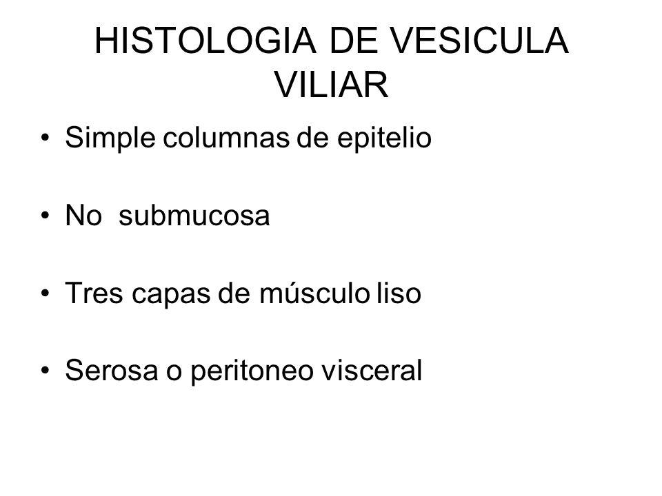 HISTOLOGIA DE VESICULA VILIAR Simple columnas de epitelio No submucosa Tres capas de músculo liso Serosa o peritoneo visceral