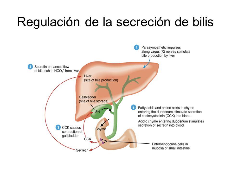 Regulación de la secreción de bilis