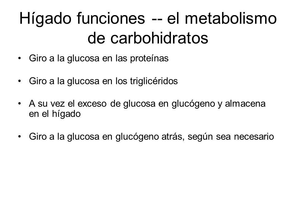 Hígado funciones -- el metabolismo de carbohidratos Giro a la glucosa en las proteínas Giro a la glucosa en los triglicéridos A su vez el exceso de glucosa en glucógeno y almacena en el hígado Giro a la glucosa en glucógeno atrás, según sea necesario