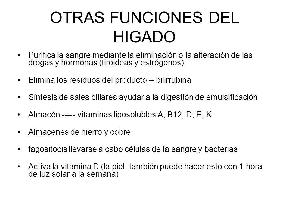 OTRAS FUNCIONES DEL HIGADO Purifica la sangre mediante la eliminación o la alteración de las drogas y hormonas (tiroideas y estrógenos) Elimina los re