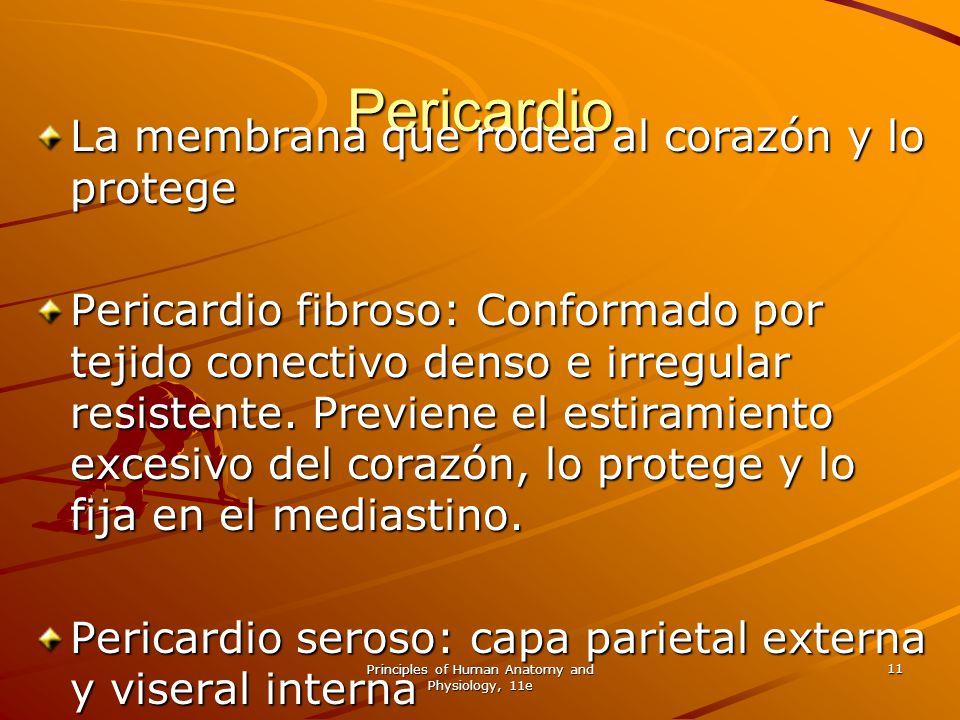 Principles of Human Anatomy and Physiology, 11e 11 Pericardio La membrana que rodea al corazón y lo protege Pericardio fibroso: Conformado por tejido