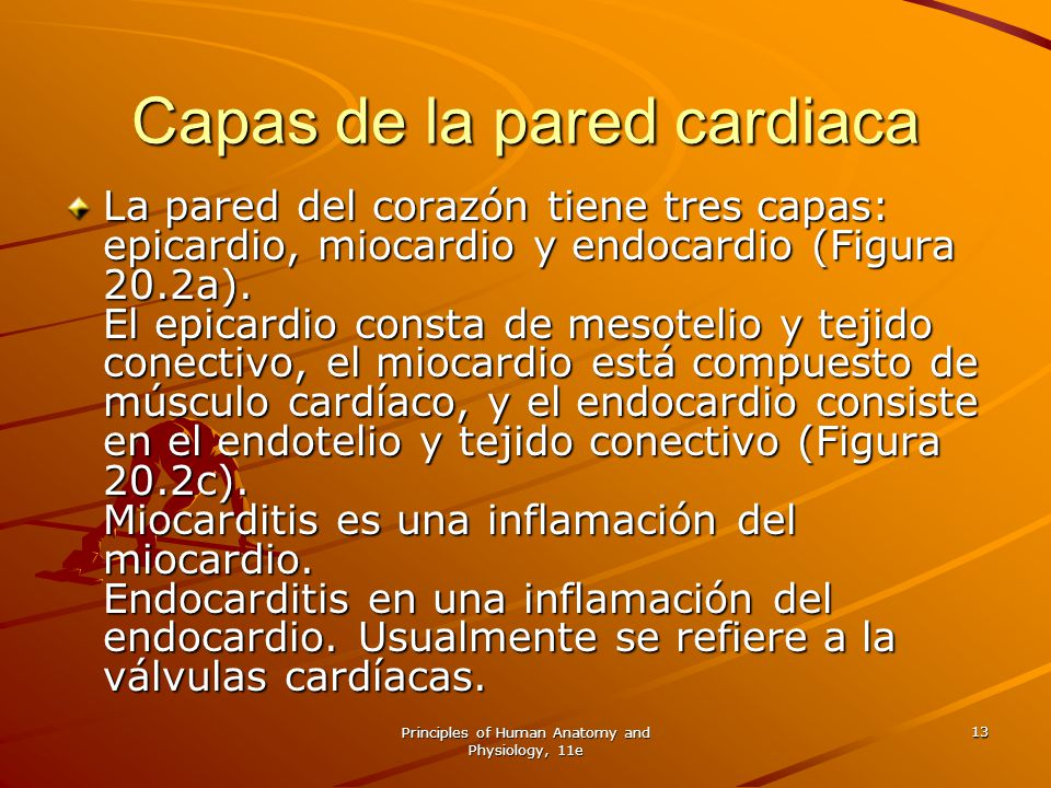 Principles of Human Anatomy and Physiology, 11e 13 Capas de la pared cardiaca La pared del corazón tiene tres capas: epicardio, miocardio y endocardio