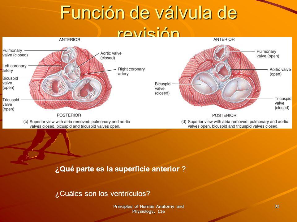 Principles of Human Anatomy and Physiology, 11e 32 ¿Qué parte es la superficie anterior ? ¿Cuáles son los ventrículos? Función de válvula de revisión