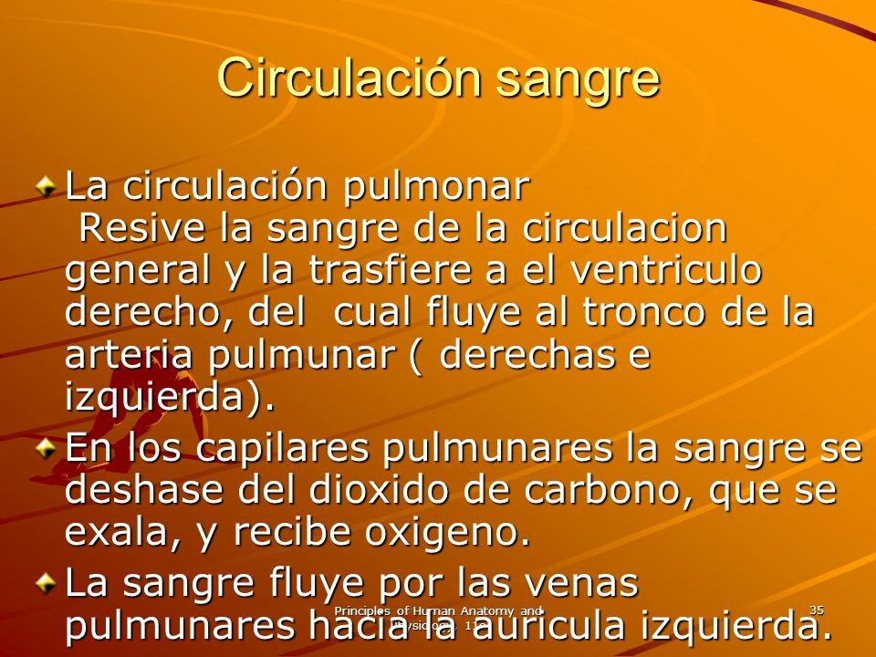 Principles of Human Anatomy and Physiology, 11e 35 La circulación pulmonar Resive la sangre de la circulacion general y la trasfiere a el ventriculo d