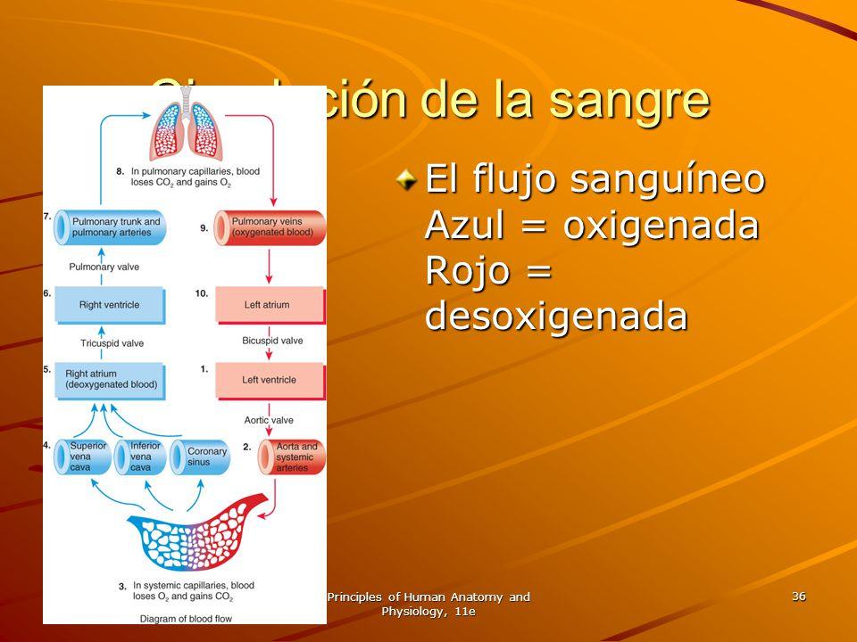 Principles of Human Anatomy and Physiology, 11e 36 Circulación de la sangre El flujo sanguíneo Azul = oxigenada Rojo = desoxigenada