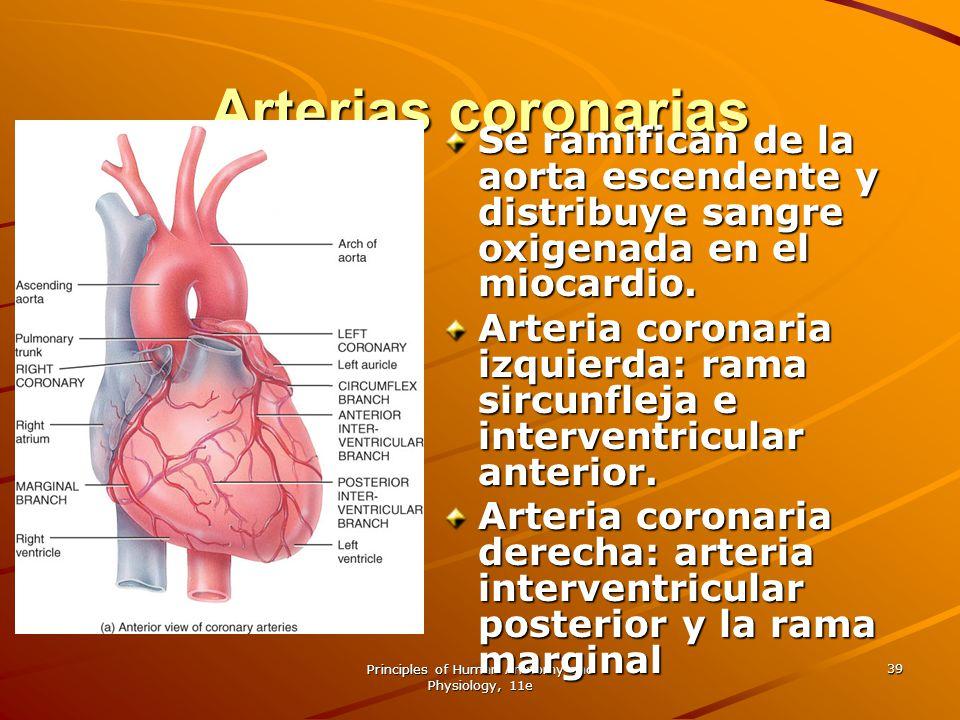 Principles of Human Anatomy and Physiology, 11e 39 Arterias coronarias Se ramifican de la aorta escendente y distribuye sangre oxigenada en el miocard