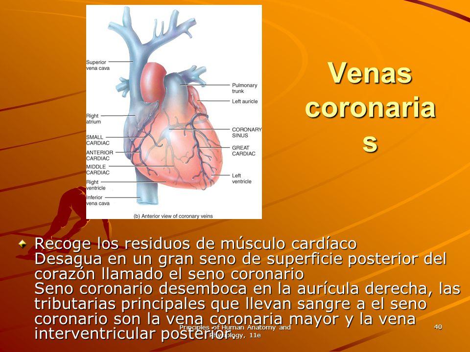 Principles of Human Anatomy and Physiology, 11e 40 Venas coronaria s Recoge los residuos de músculo cardíaco Desagua en un gran seno de superficie pos