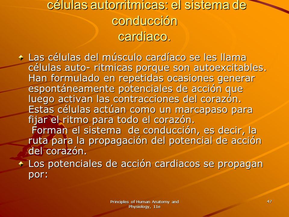 Principles of Human Anatomy and Physiology, 11e 47 células autorritmicas: el sistema de conducción cardiaco. células autorritmicas: el sistema de cond