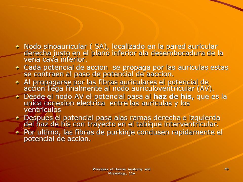 Principles of Human Anatomy and Physiology, 11e 49 Nodo sinoauricular ( SA), localizado en la pared auricular derecha justo en el plano inferior ala d