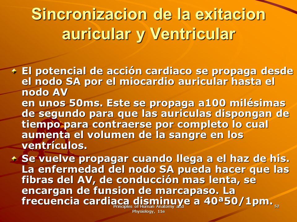 Principles of Human Anatomy and Physiology, 11e 52 Sincronizacion de la exitacion auricular y Ventricular El potencial de acción cardiaco se propaga d