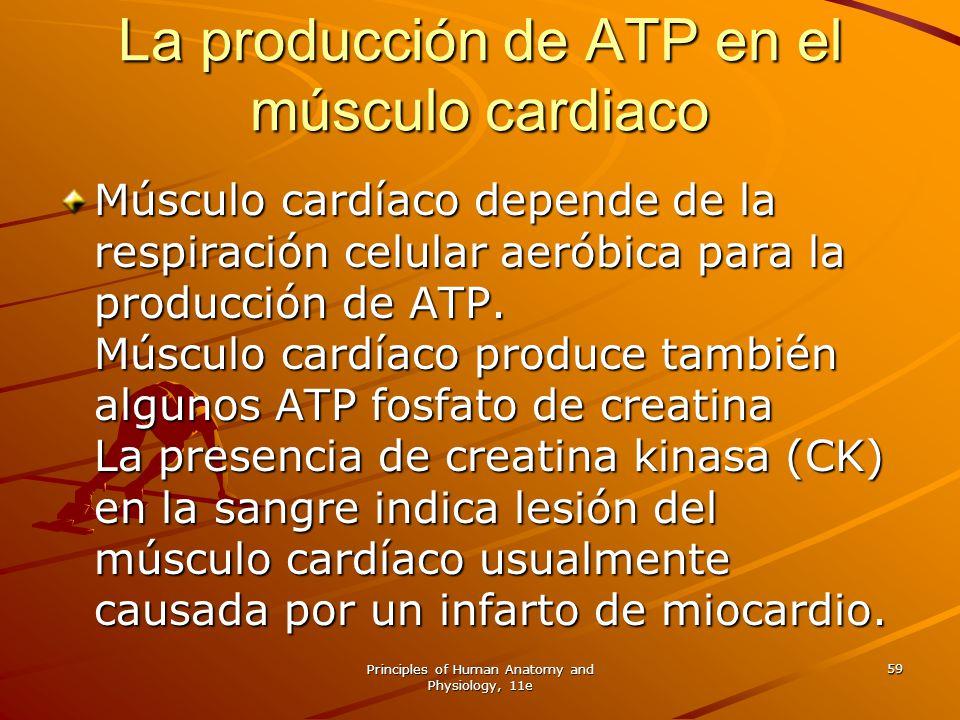 Principles of Human Anatomy and Physiology, 11e 59 La producción de ATP en el músculo cardiaco Músculo cardíaco depende de la respiración celular aeró