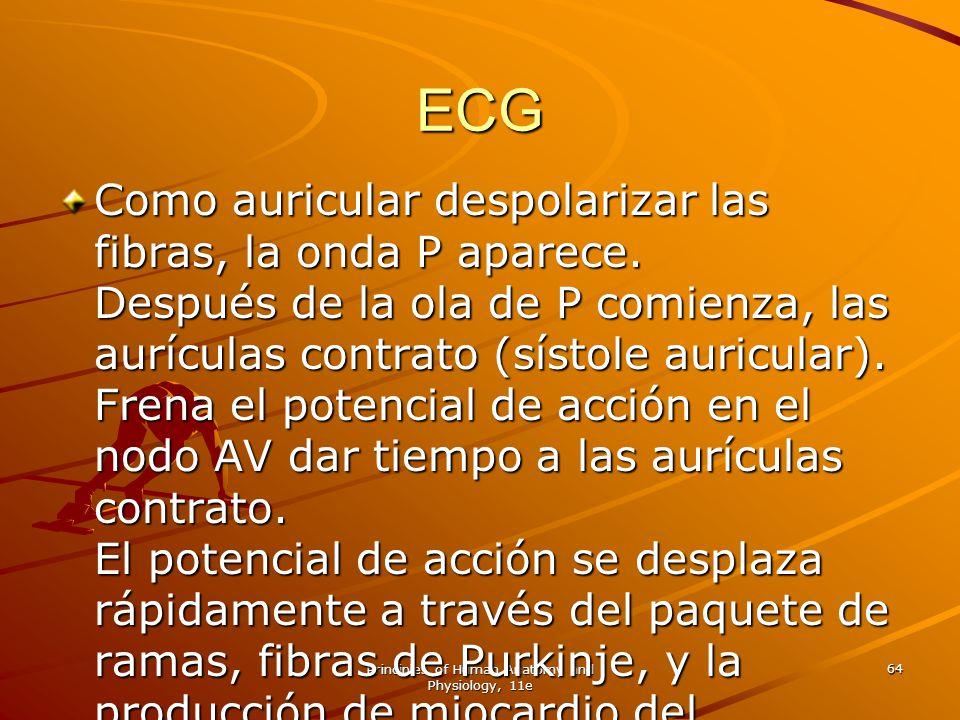 Principles of Human Anatomy and Physiology, 11e 64 ECG Como auricular despolarizar las fibras, la onda P aparece. Después de la ola de P comienza, las
