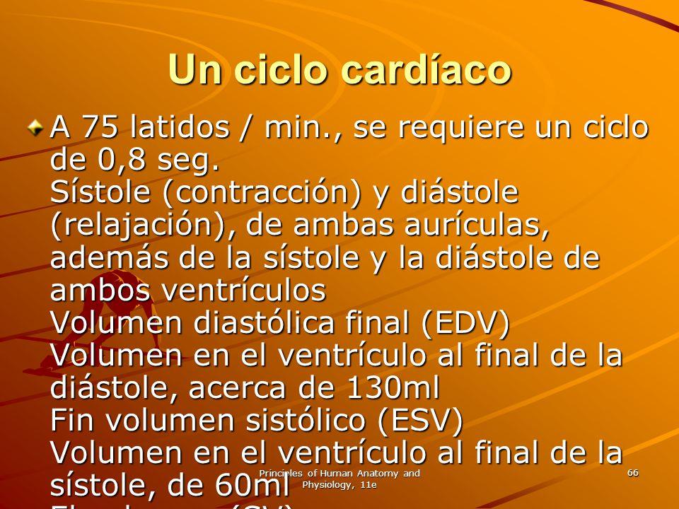 Principles of Human Anatomy and Physiology, 11e 66 Un ciclo cardíaco A 75 latidos / min., se requiere un ciclo de 0,8 seg. Sístole (contracción) y diá