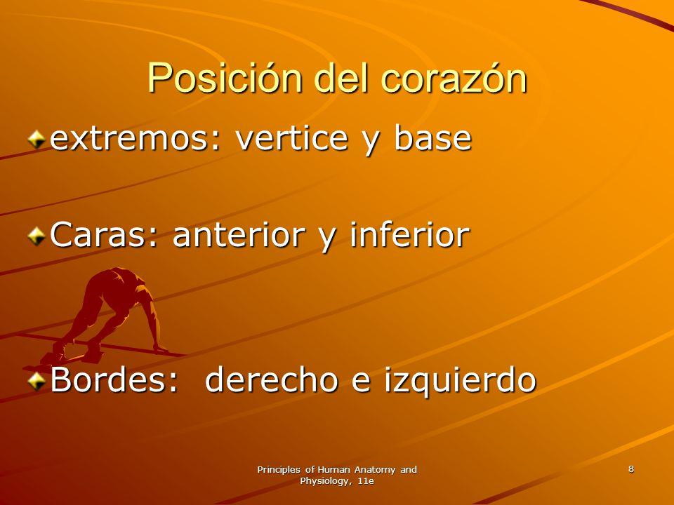 Principles of Human Anatomy and Physiology, 11e 8 Posición del corazón extremos: vertice y base Caras: anterior y inferior Bordes: derecho e izquierdo