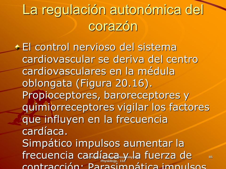 Principles of Human Anatomy and Physiology, 11e 85 La regulación autonómica del corazón El control nervioso del sistema cardiovascular se deriva del c
