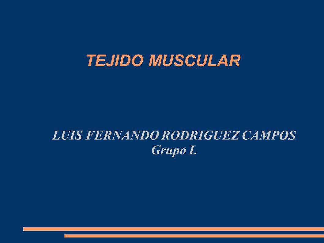 TEJIDO MUSCULAR LUIS FERNANDO RODRIGUEZ CAMPOS Grupo L