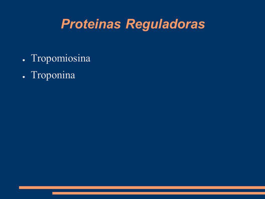 Proteinas Reguladoras Tropomiosina Troponina