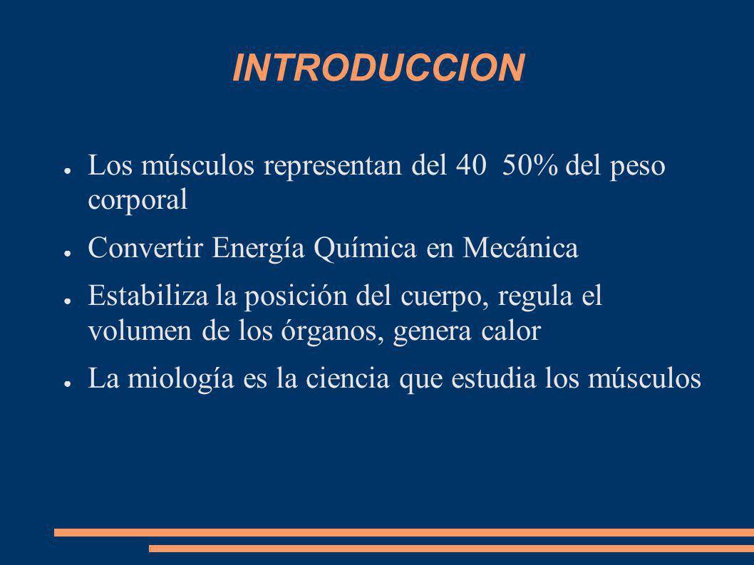 INTRODUCCION Los músculos representan del 40 50% del peso corporal Convertir Energía Química en Mecánica Estabiliza la posición del cuerpo, regula el volumen de los órganos, genera calor La miología es la ciencia que estudia los músculos
