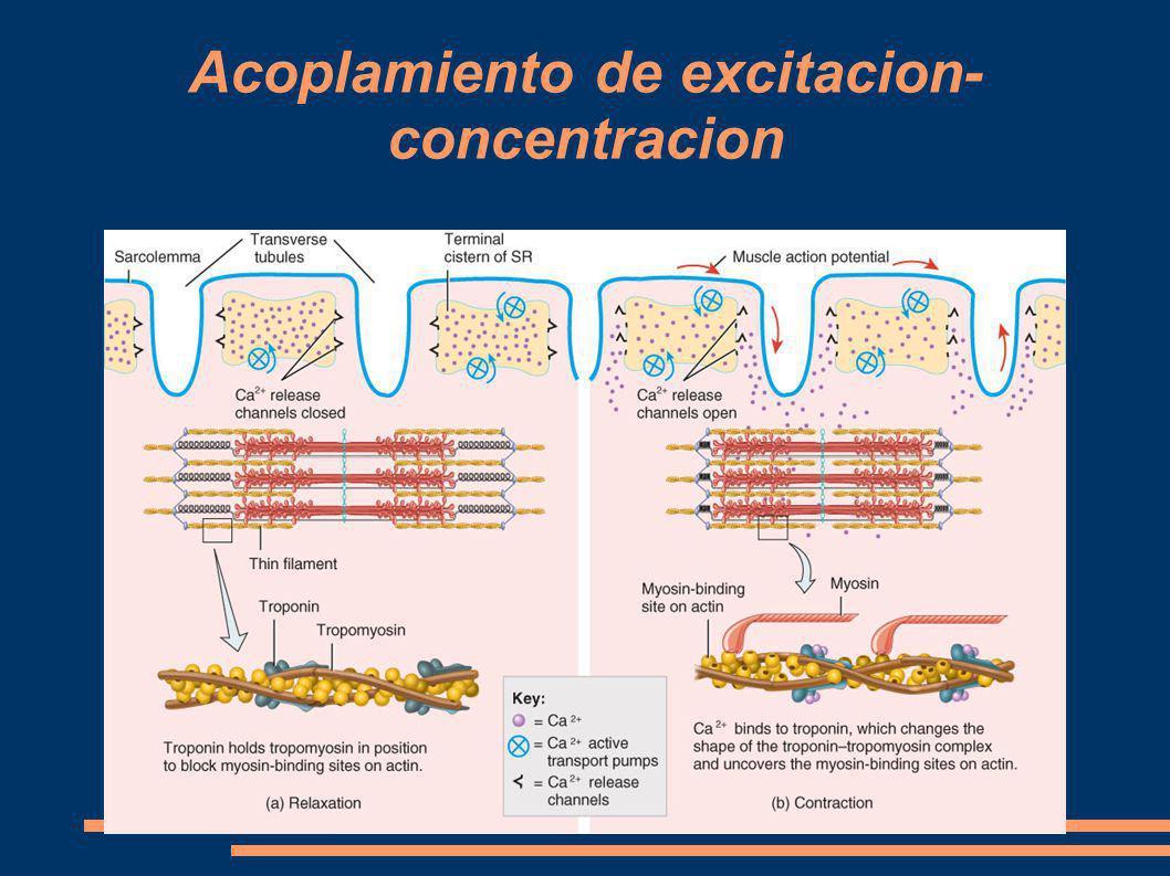 Acoplamiento de excitacion- concentracion