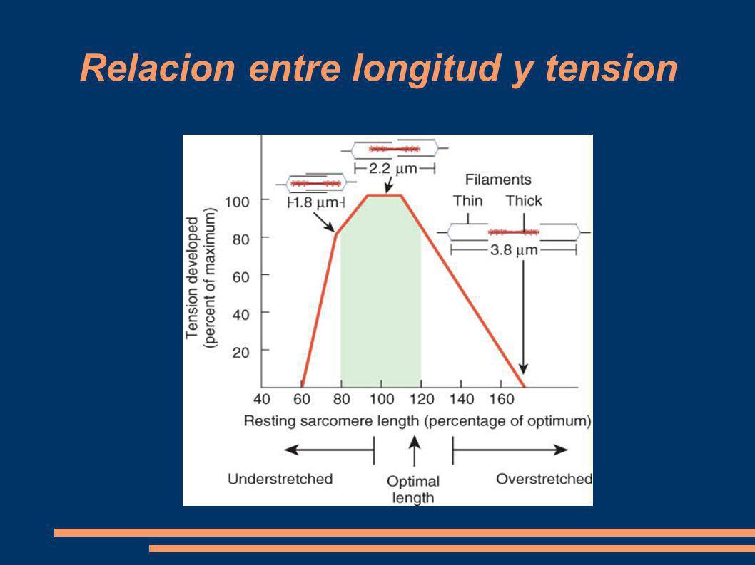 Relacion entre longitud y tension