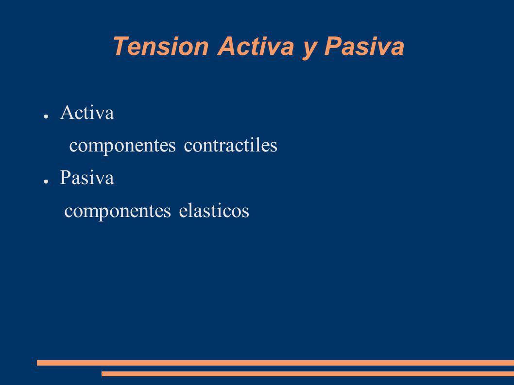 Tension Activa y Pasiva Activa componentes contractiles Pasiva componentes elasticos