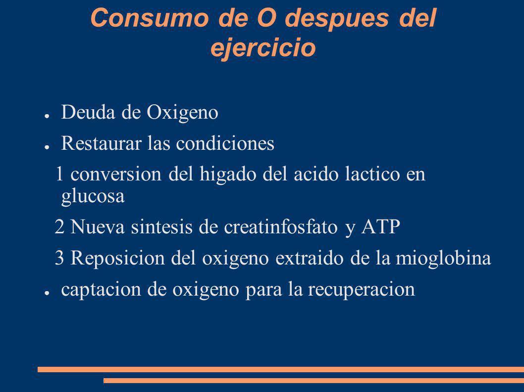 Consumo de O despues del ejercicio Deuda de Oxigeno Restaurar las condiciones 1 conversion del higado del acido lactico en glucosa 2 Nueva sintesis de creatinfosfato y ATP 3 Reposicion del oxigeno extraido de la mioglobina captacion de oxigeno para la recuperacion