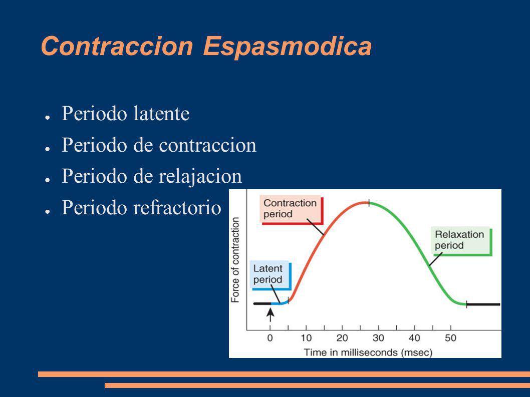 Contraccion Espasmodica Periodo latente Periodo de contraccion Periodo de relajacion Periodo refractorio