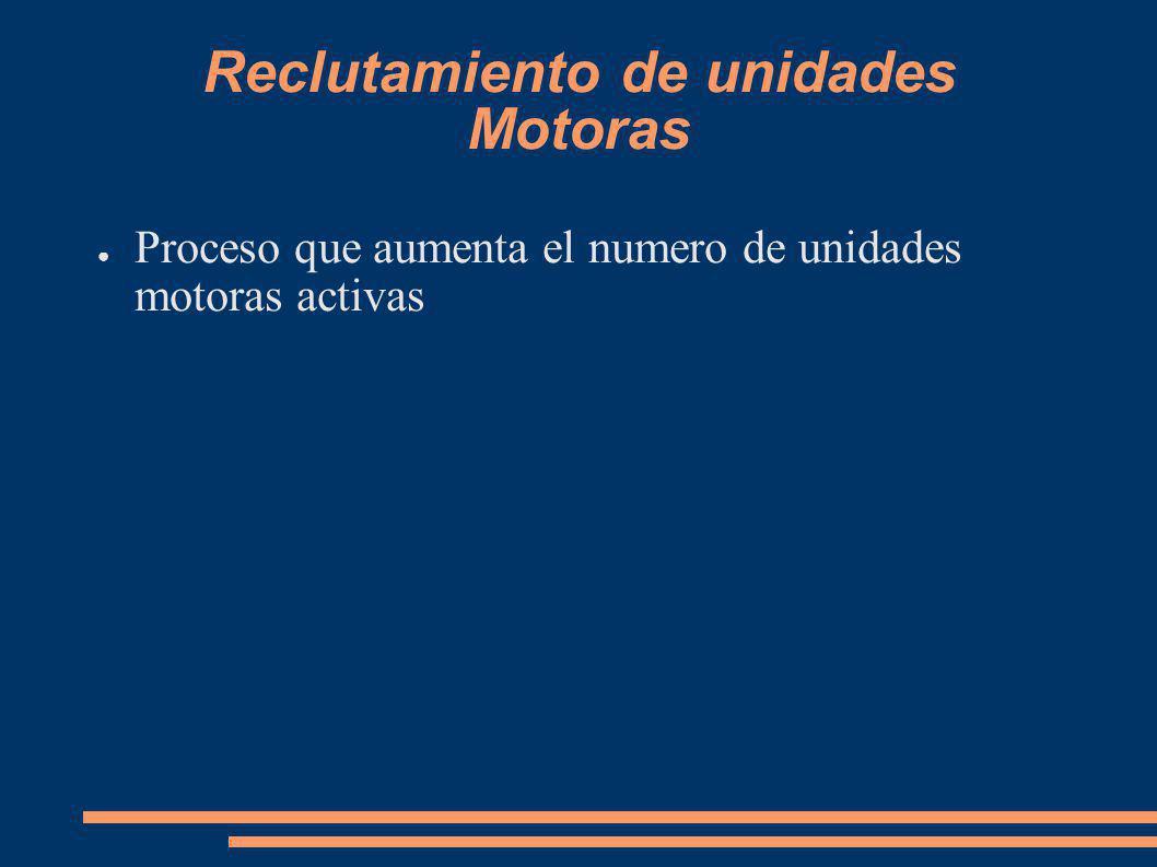 Reclutamiento de unidades Motoras Proceso que aumenta el numero de unidades motoras activas