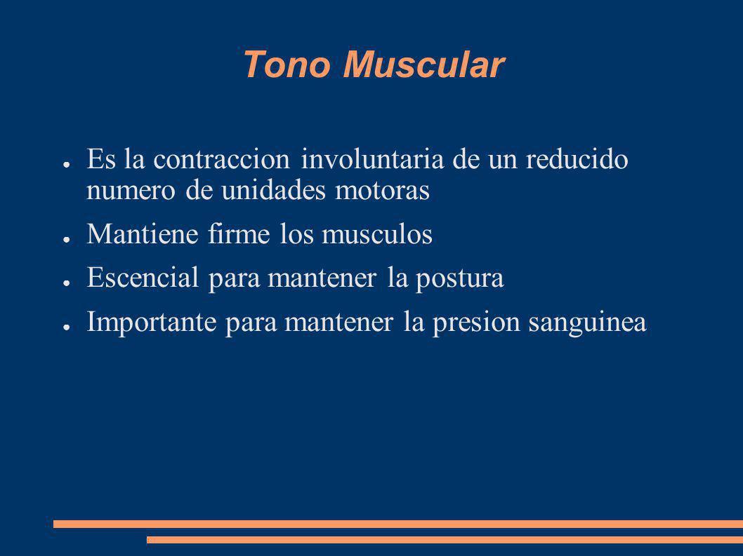 Tono Muscular Es la contraccion involuntaria de un reducido numero de unidades motoras Mantiene firme los musculos Escencial para mantener la postura Importante para mantener la presion sanguinea