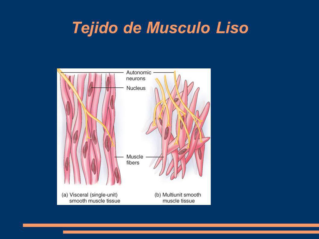Tejido de Musculo Liso
