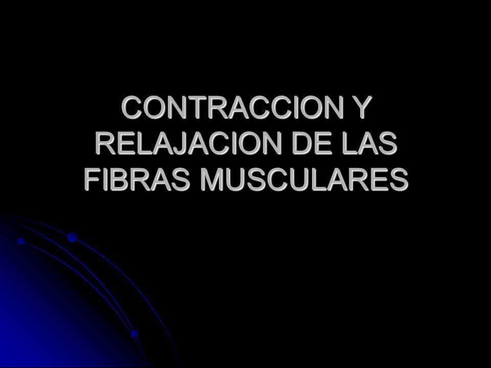 CONTRACCION Y RELAJACION DE LAS FIBRAS MUSCULARES