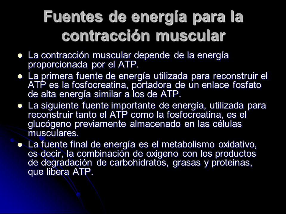 Fuentes de energía para la contracción muscular La contracción muscular depende de la energía proporcionada por el ATP. La contracción muscular depend