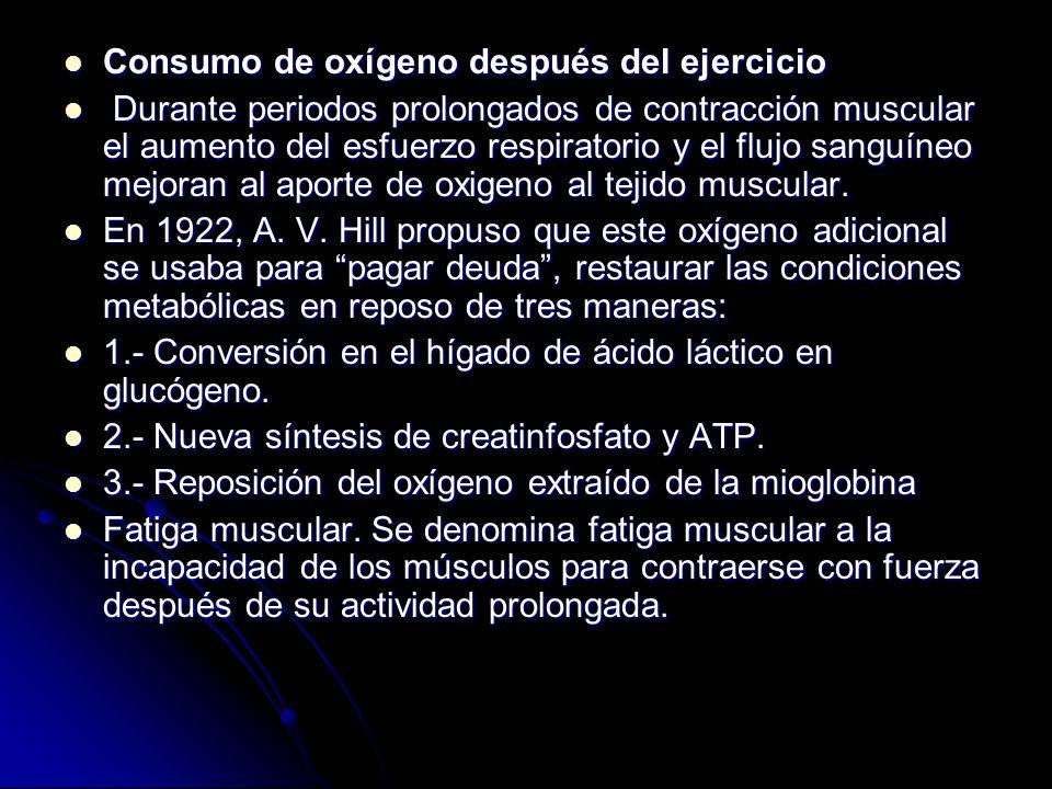 Consumo de oxígeno después del ejercicio Consumo de oxígeno después del ejercicio Durante periodos prolongados de contracción muscular el aumento del