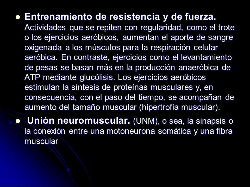 Entrenamiento de resistencia y de fuerza. Actividades que se repiten con regularidad, como el trote o los ejercicios aeróbicos, aumentan el aporte de