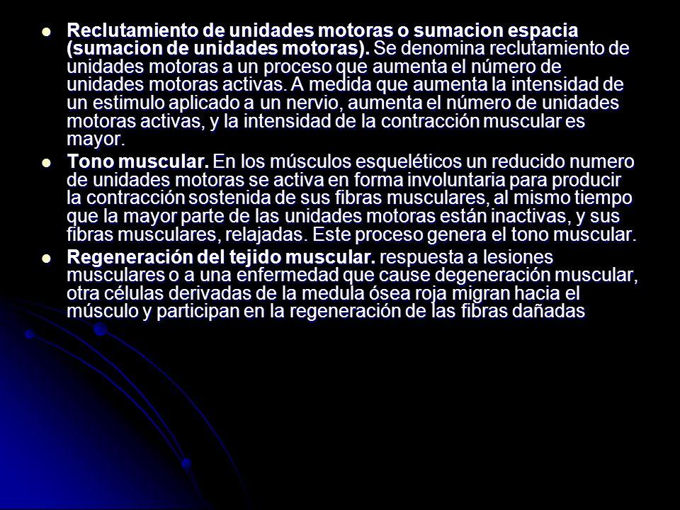 Reclutamiento de unidades motoras o sumacion espacia (sumacion de unidades motoras). Se denomina reclutamiento de unidades motoras a un proceso que au